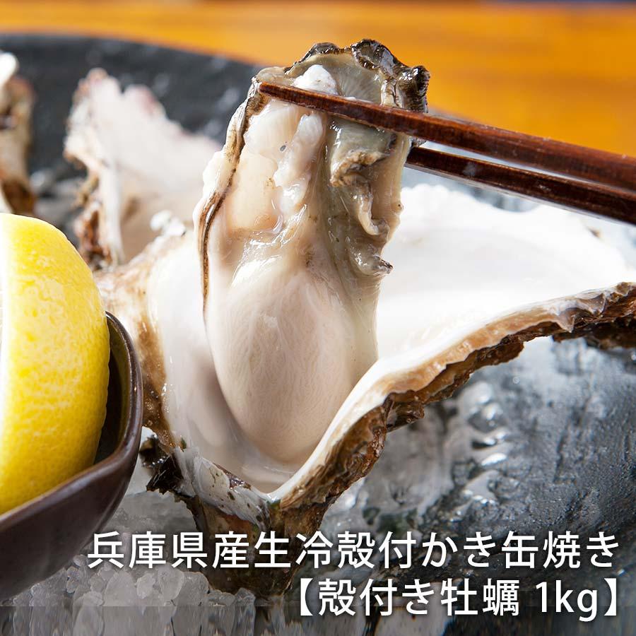 兵庫県産生冷殻付かき缶焼き 産地直送【殻付き牡蠣1kg】【かき屋 錦・だいやす】